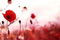 fototapeta z kwiatami